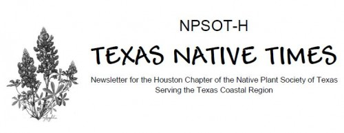 Tx Native Times banner