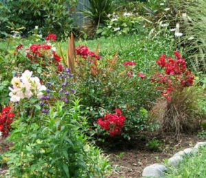Roses-and-natives