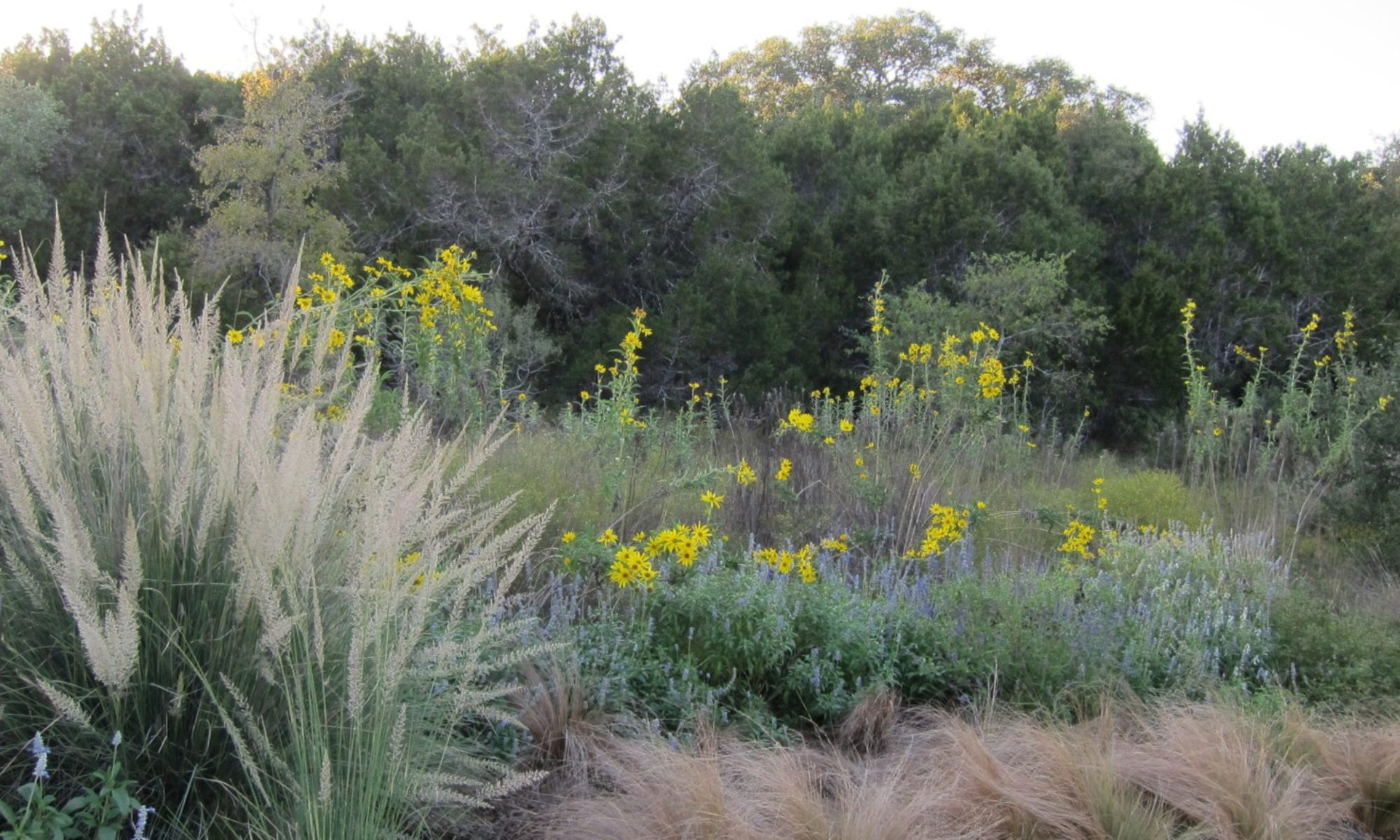 what is texas native plant week
