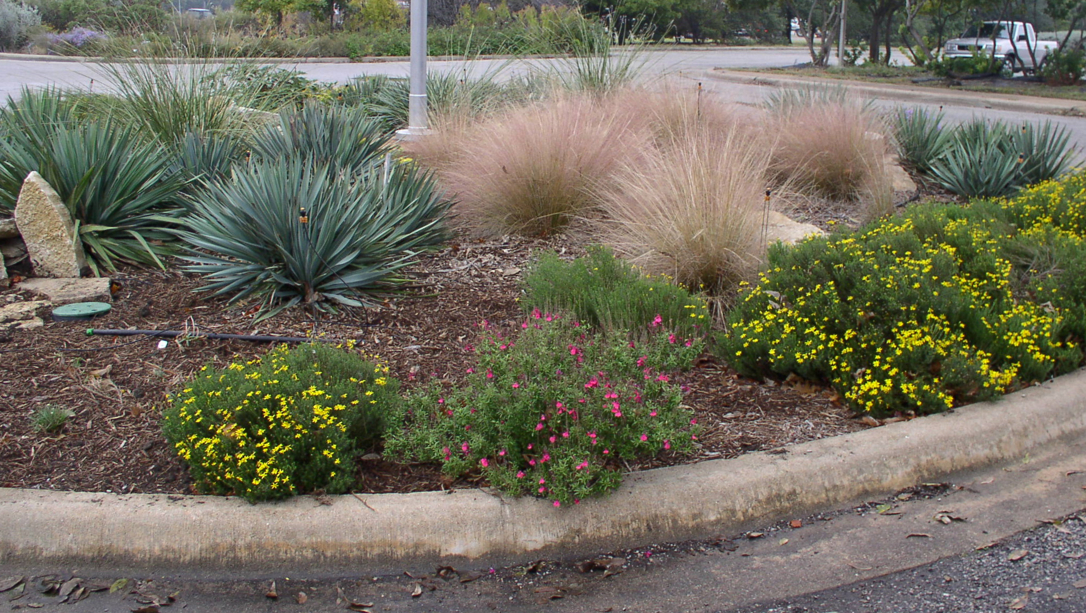 Native bunchgrass in the landscape for Grass tree garden designs